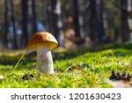 big mushroom grow in sunny moss.... | Shutterstock . vector #1201630423