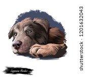 lapponian herder puppy dog...   Shutterstock . vector #1201632043