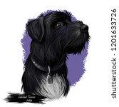 lakeland terrier puppy wearing...   Shutterstock . vector #1201633726