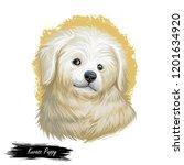 kuvasz puppy portrait of small...   Shutterstock . vector #1201634920