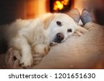 Stock photo dog lies in the living room in front of the fireplace with fire 1201651630