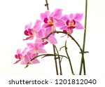 collection of orchid isolated... | Shutterstock . vector #1201812040
