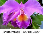 collection of orchid isolated... | Shutterstock . vector #1201812820