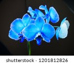 collection of orchid isolated... | Shutterstock . vector #1201812826