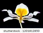 collection of orchid isolated... | Shutterstock . vector #1201812850