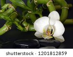 collection of orchid isolated... | Shutterstock . vector #1201812859