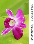orchid flower at beautiful | Shutterstock . vector #1201815433