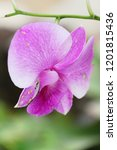 orchid flower at beautiful | Shutterstock . vector #1201815436