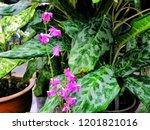 beautiful pink wild orchid in... | Shutterstock . vector #1201821016