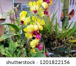 beautiful yellow orchid in the... | Shutterstock . vector #1201822156