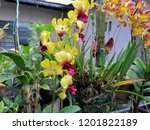 beautiful yellow orchid in the... | Shutterstock . vector #1201822189