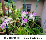 beautiful purple orchid in the... | Shutterstock . vector #1201823176