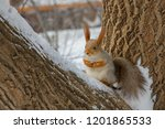 Forest Squirrel Sitting On A...