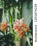 pink orange thai orchid in the... | Shutterstock . vector #1201874239