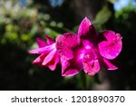 purple orchid closeup | Shutterstock . vector #1201890370