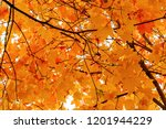 beautiful autumn landscape.... | Shutterstock . vector #1201944229