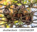 Group Of Little Monkeys Sitting ...