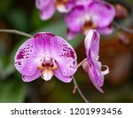 a pink color orchid flower | Shutterstock . vector #1201993456