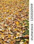 abstract background of autumn... | Shutterstock . vector #1202020549
