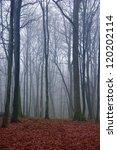Dark Mysterious Forest In...