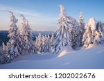 snow covered spruce trees in...   Shutterstock . vector #1202022676