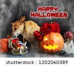 charming little dog with a... | Shutterstock . vector #1202060389