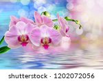 close up of orchid flower | Shutterstock . vector #1202072056