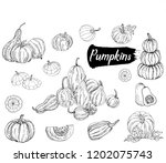 set of hand drawn sketch style... | Shutterstock .eps vector #1202075743