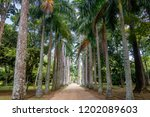 avenue of royal palm trees at...   Shutterstock . vector #1202089603