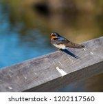a dainty delightful  little... | Shutterstock . vector #1202117560