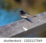 a dainty delightful  little... | Shutterstock . vector #1202117569