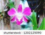 purple orchid in the garden | Shutterstock . vector #1202125090