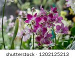 the purple orchids garden | Shutterstock . vector #1202125213
