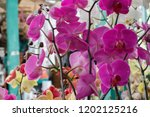 the purple orchids garden | Shutterstock . vector #1202125216