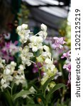 the purple and green orchids... | Shutterstock . vector #1202125219