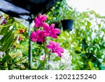 the purple orchids garden | Shutterstock . vector #1202125240