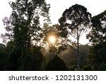 jungle evening sunset over... | Shutterstock . vector #1202131300