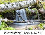 forest scene of the stream and... | Shutterstock . vector #1202166253