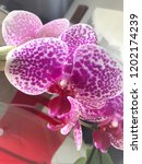 beautiful orchid close up | Shutterstock . vector #1202174239