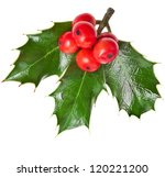 European Holly Ilex Christmas...