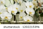 greenhouse with orchids. | Shutterstock . vector #1202215396