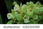 small orchids with dark... | Shutterstock . vector #1202231050