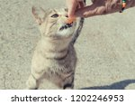 a cat eating a piece of meat... | Shutterstock . vector #1202246953