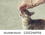 cat opening mouth while is... | Shutterstock . vector #1202246956
