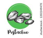 pistachio nut vintage hand... | Shutterstock .eps vector #1202249470
