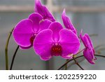 beautiful close up purple... | Shutterstock . vector #1202259220