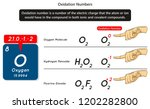 oxidation numbers infographic... | Shutterstock .eps vector #1202282800