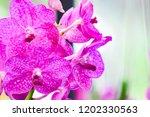 pink phalaenopsis or moth... | Shutterstock . vector #1202330563