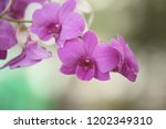 close up  thai  orchid in... | Shutterstock . vector #1202349310