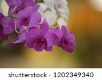 close up  thai  orchid in... | Shutterstock . vector #1202349340